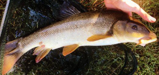 Pescare sul Serio