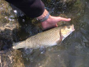 pescare con acqua alta