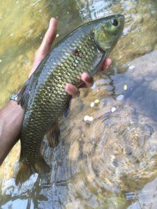 pescare nei raschi