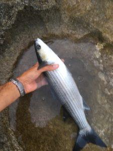 Pescare cefali ed occhiate