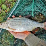 pescare i rutili